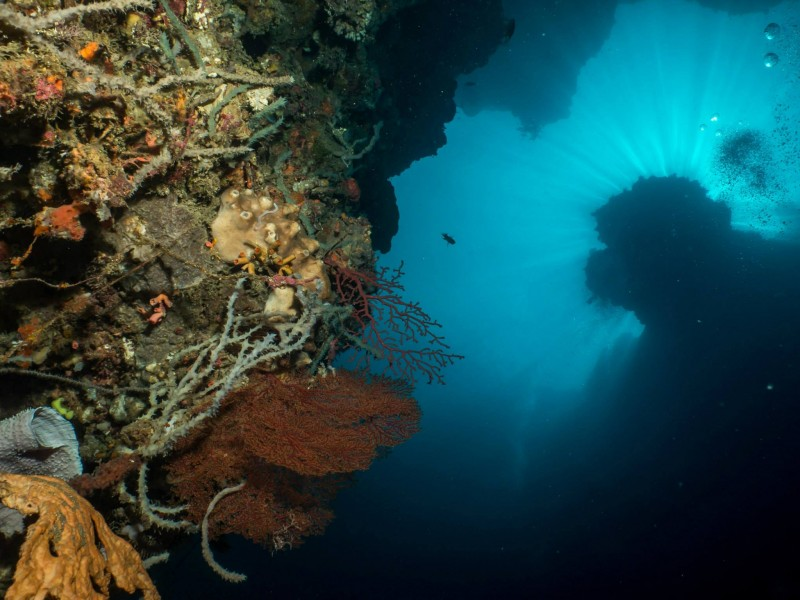 Gorontalo Diving